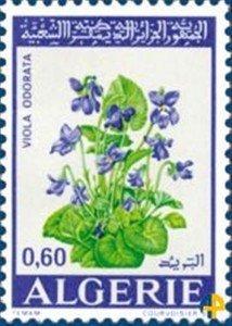 39.violette
